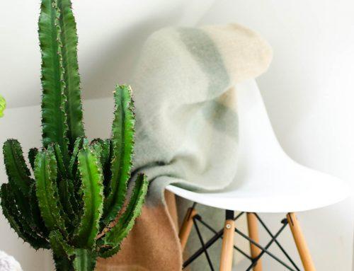 Een grote cactus als statement piece