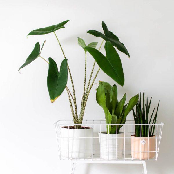 Alternatieve plantenpotten