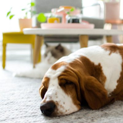 Hond interieur