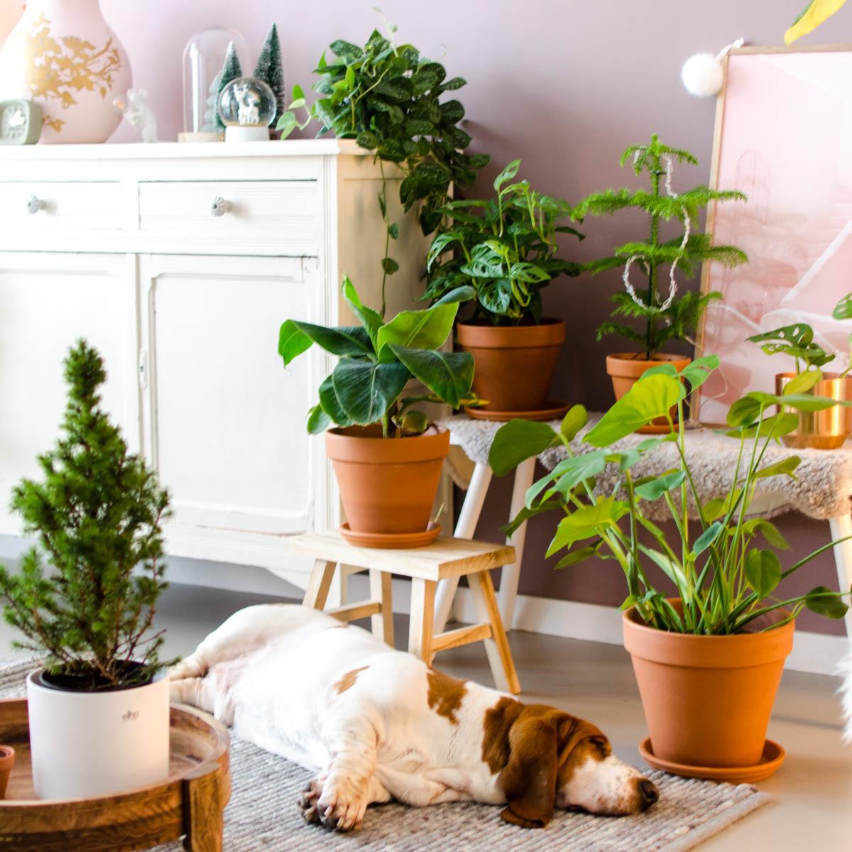 Kamerplanten in de winter