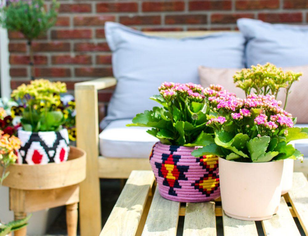 De Kalanchoë: kleurrijke en makkelijke plant voor je terras