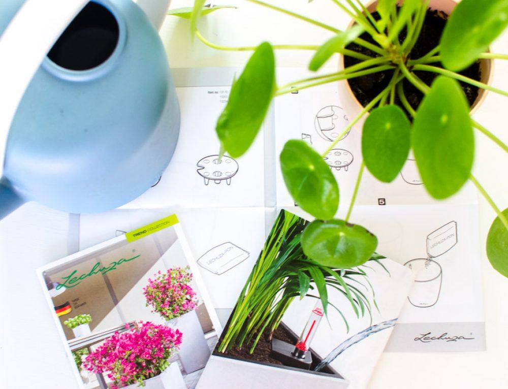 Een plantenpot met waterreservoir; wat moet je weten?