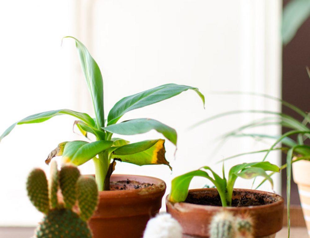 Planten Q&A deel 1
