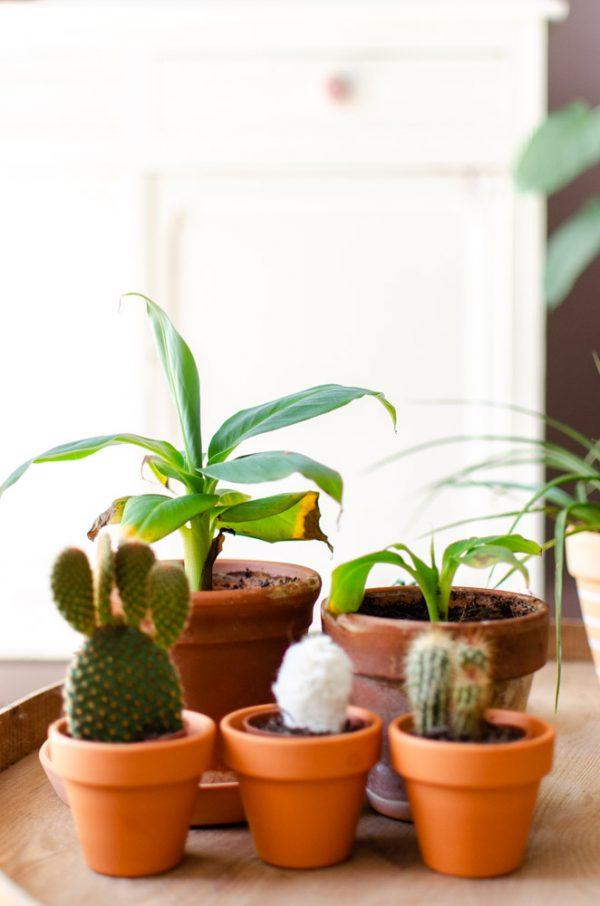 planten vragen