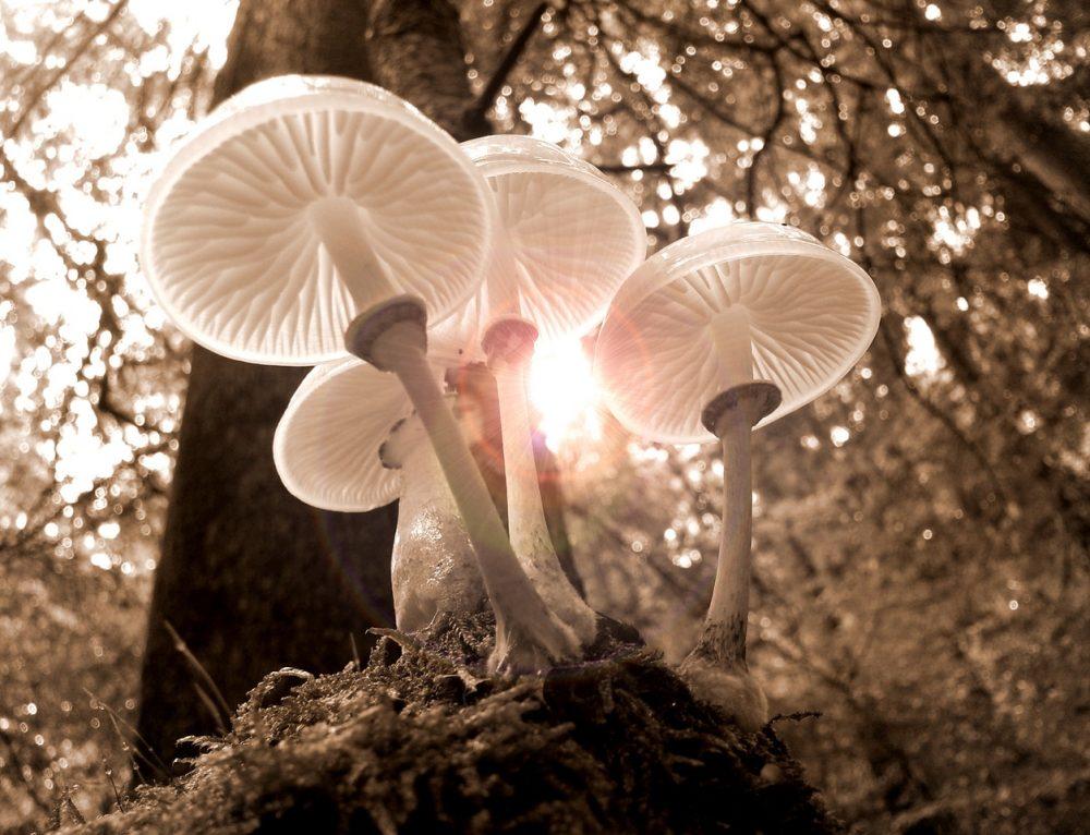 Help, een paddenstoel in de potgrond! Alles over schimmel in je kamerplant