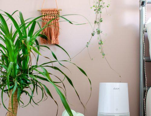 Review: Duux Aura Mosquito Trap (muggenvanger)