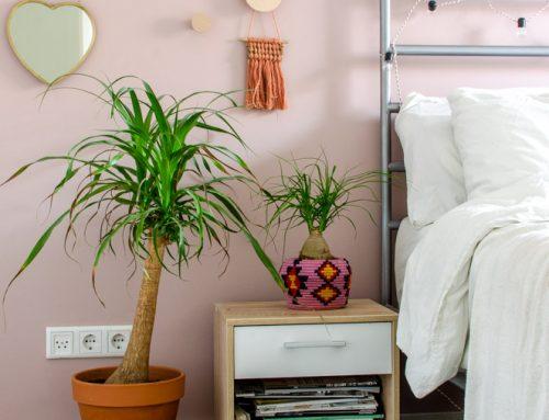 De Olifantspoot (Beaucarnea): vrolijke plant voor je urban jungle