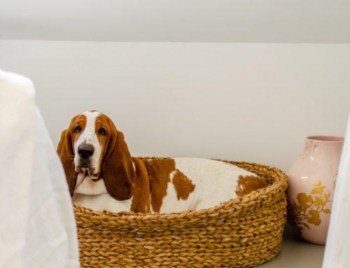 Verwen je hond en je interieur met een hondenmand van Yoshiko Home (+winactie!)