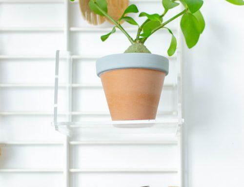 De mierenplant: exotische aanwinst voor je interieur