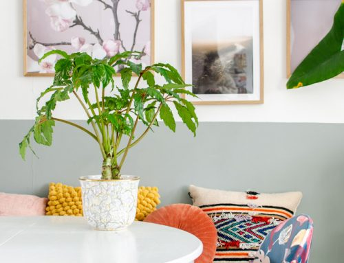 Bijzondere en makkelijke plant: de Begonia Carolineifolia