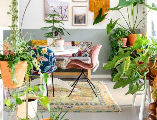 Kamerplanten in combinatie met vloerverwarming (mijn beste tips!)