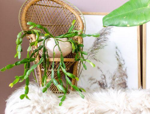 3x suffe kamerplanten die stiekem best leuk zijn