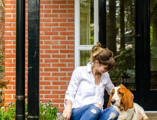Bed & Boshuisje: lekker weg in eigen land (+ de hond mag mee!)
