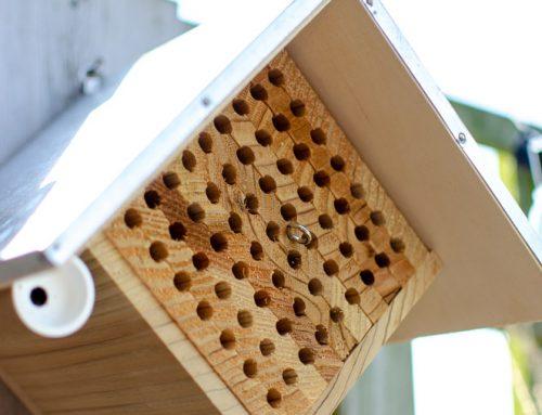 Knuffelbijen in de tuin