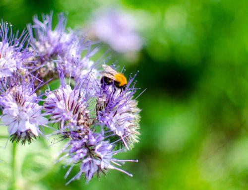 Tips voor meer biodiversiteit in de tuin