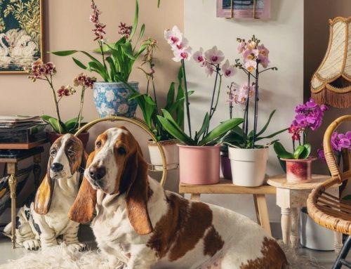 Een nieuwe kamerplant kopen? Hier moet je op letten